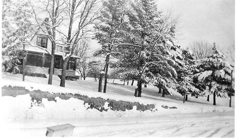 8-pines_snowy2